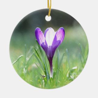 Lila Krokus im Frühling Rundes Keramik Ornament