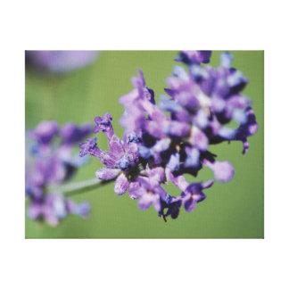 Lila Lavendel-Blumen des schönen Fotos Leinwanddruck