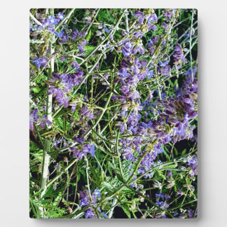 Lila Lavendel-botanische Blumen Fotoplatte