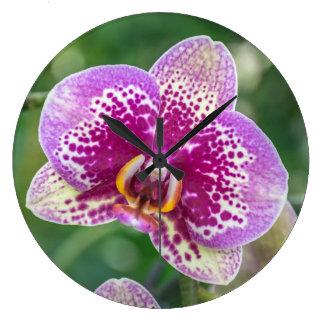 Lila Orchidee herauf nahe Wanduhr