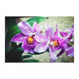 Lila Orchideen wickelten Leinwand-Druck ein Leinwanddruck