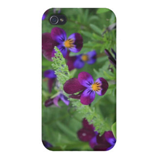 Lila Panies 4/4s iPhone 4/4S Cover