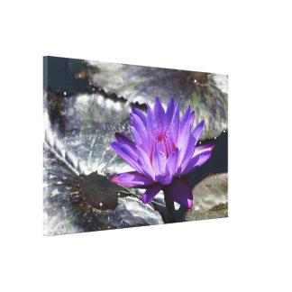 Lila tropisches Wasserlilie 27 x 17 der Leinwand