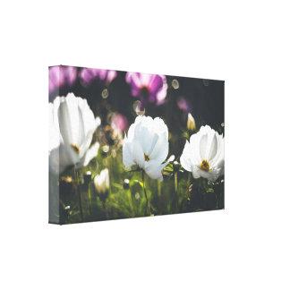 Lila und weiße Anemonen-Blumen Leinwanddruck