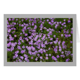 Lila Verbenen der Blume 45 Karte