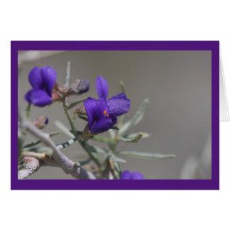 Lila Wüsten-Wildblume Grußkarte
