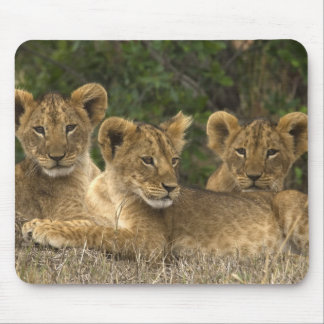Lion Siblings Mauspad