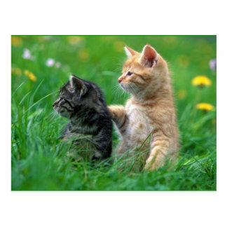 little_kittens (26) entzückendes flockiges der postkarte