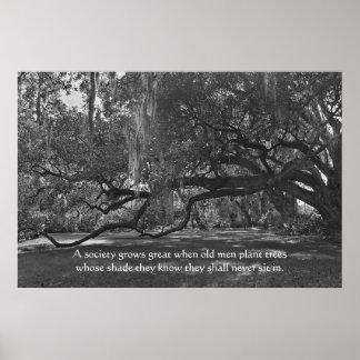Live Oak-Baum-Sprichwort-Plakat-Druck Poster