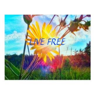 LIVEpostkarte DER WILDBLUME-FREE2 Postkarte