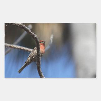 L'oiseau Autocollants Rectangulaires