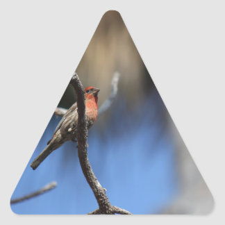 L'oiseau Autocollants En Triangle