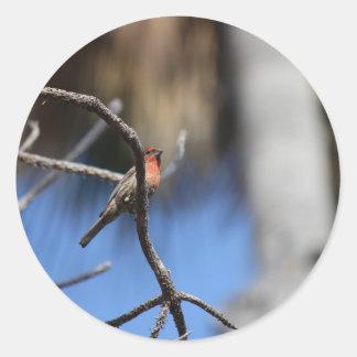 L'oiseau Adhésifs Ronds