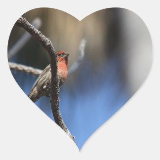 L'oiseau Autocollant En Cœur
