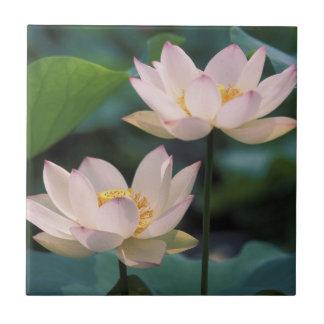Lotos-Blume in der Blüte, China Fliese