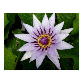 Lotos-Blume Postkarte