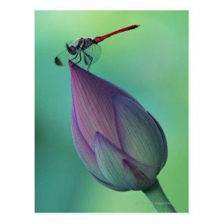 Lotos-Blumenknospe und eine Libelle Postkarte