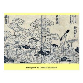 Lotos-Pflanzen durch Tachibana, Yasukuni Postkarte