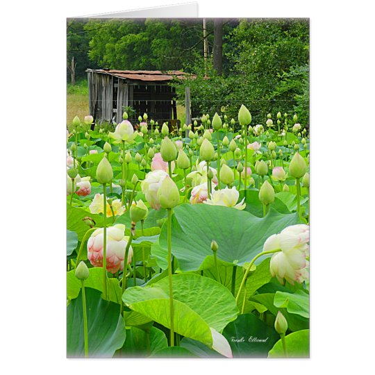 Lotos-Teich voll der blühenden Blumen Mitteilungskarte