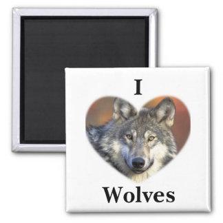 Loup gris magnet carré
