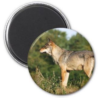 Loup gris scandinave magnets pour réfrigérateur