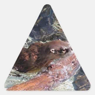 Loutre espiègle sticker triangulaire