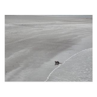 Loutre sur une plage en Irlande Carte Postale
