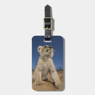 Löwe CUB (Panthera Löwe) sitzend auf Sand, Namibia Adress Schild
