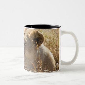 Löwe im Legen in das hohe Serengeti Gras Zweifarbige Tasse