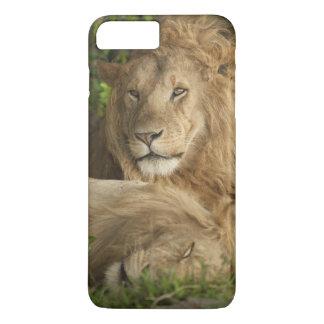 Löwe, Panthera Löwe, Mannesstillstehen iPhone 8 Plus/7 Plus Hülle