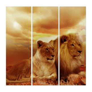 Löwe und Löwin AcryliPrint®HD Triptychon