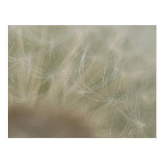 Löwenzahn-Samen Postkarte