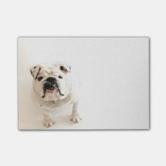 Loyale weiße Bulldoggen-Fotografie Post-it Klebezettel