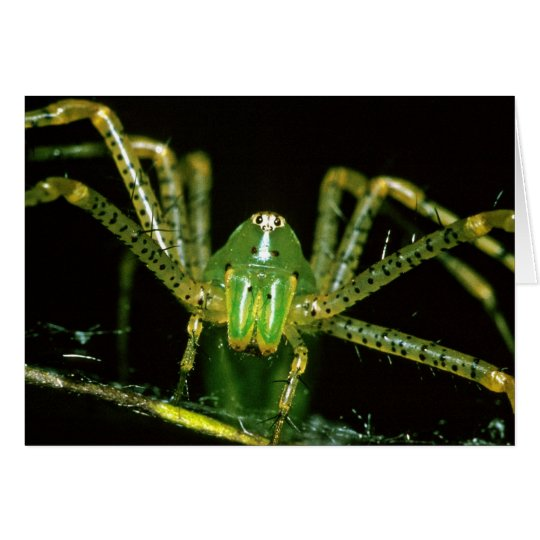 Luchs-Spinne Grußkarte