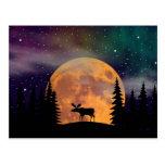 Lumières du nord de nuits du nord cartes postales