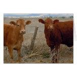 Lustig erhalten Sie Brunnen - rote Kuh TierSpaß -  Grußkarte