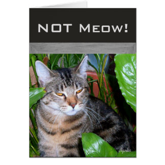 """Lustige Ausdruck""""nicht Meow-"""" Karte"""