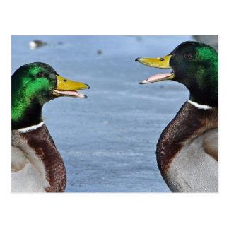 Lustige Enten Postkarte