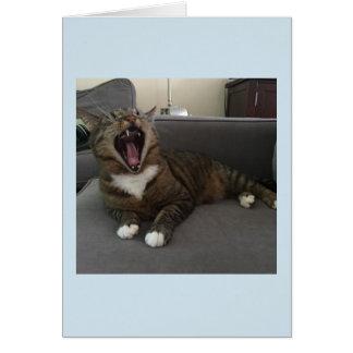 Lustige Katzen, Entschuldigung für die Isolierung Karte