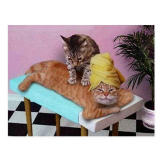 Lustige Katzen-Massage Postkarte