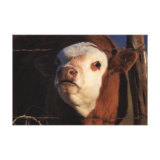 Lustige Kuh-Kunst Leinwanddruck
