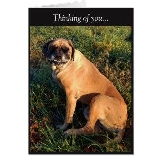 Lustige lächelnde englische Mastiff-Hundekarte Grußkarte