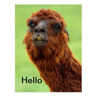Lustige Lama-Postkarte - jeder Anlass Postkarte
