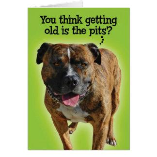 Lustige Pitbull-Geburtstags-Karte Karte