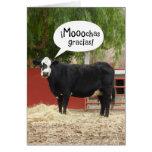 Lustige Spanisch sprechende Kuh danken Ihnen zu ka