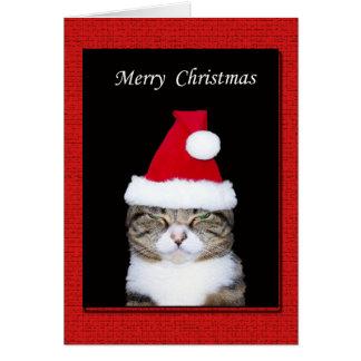 Lustige Weihnachtsgruß-Karte, Katze mit Grußkarte