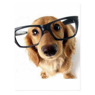 Lustiger Hund Postkarte