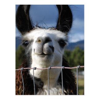 Lustiges lächelndes Lama in Südoregon Postkarte
