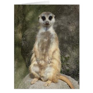 Lustiges meerkat karte
