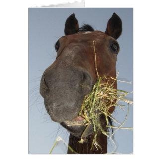 lustiges Pferd, das Karte isst